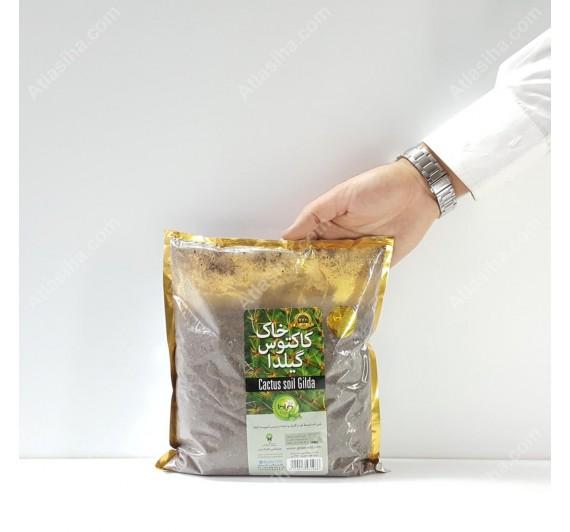 بستر آماده کاشت کاکتوس گیلدا