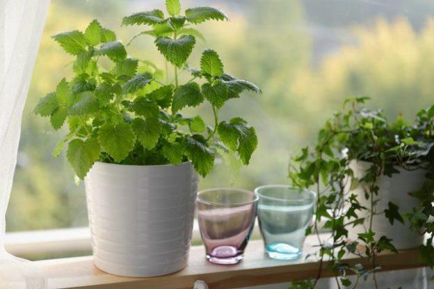 با این گیاهان همیشه سالم می مانید