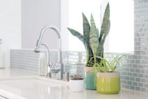 کدام گیاهان در گرمای آشپزخانه دوام می آورند؟