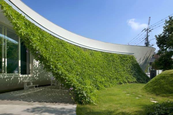 ساخت دیوار سبز در منزل