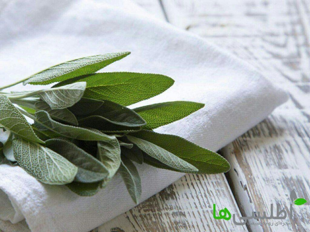 گیاه مریم گلی