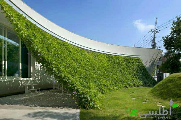 دیوار سبز در فضای باز