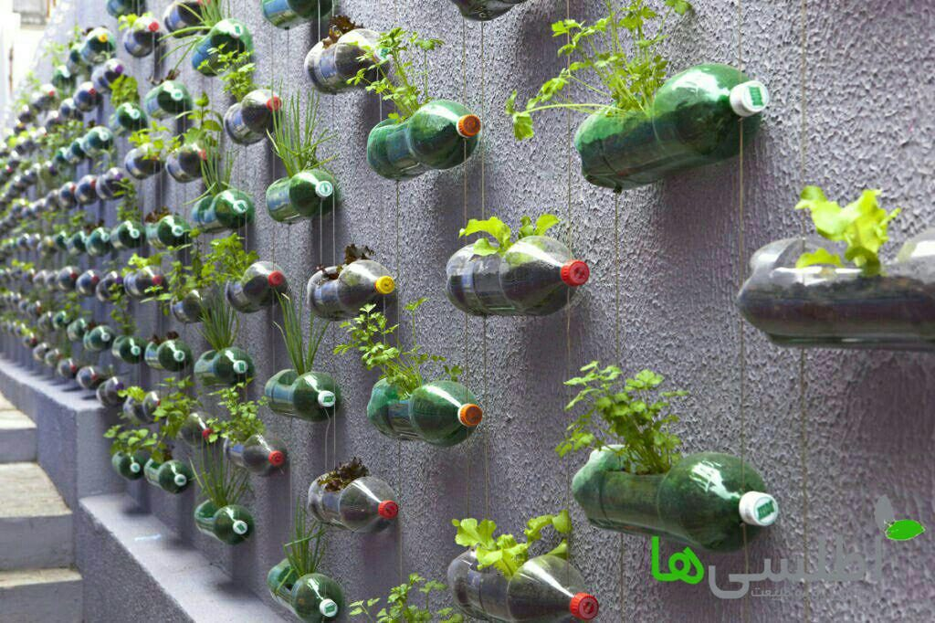 دیوار سبز به وسیله بطری های آویزان