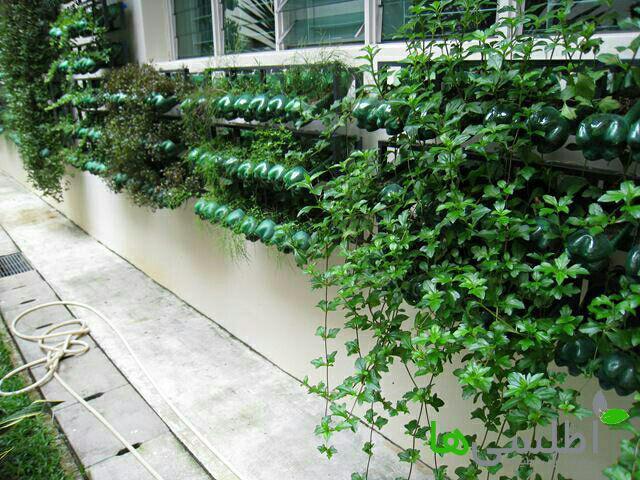 دیوار سبز به وسیله بطری و استند فلزی